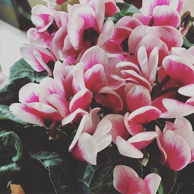 ご縁で繋がった歌詠みの先生からお祝いのお花と温かい言葉を頂きました。ご縁を大切に(^-^) #健康整体 #健康整体の家つみき #健康 #操体法 #繋がり #ご縁 #お祝い #歌詠み #お花 #先生 #言葉 #癒し #感謝 #開業