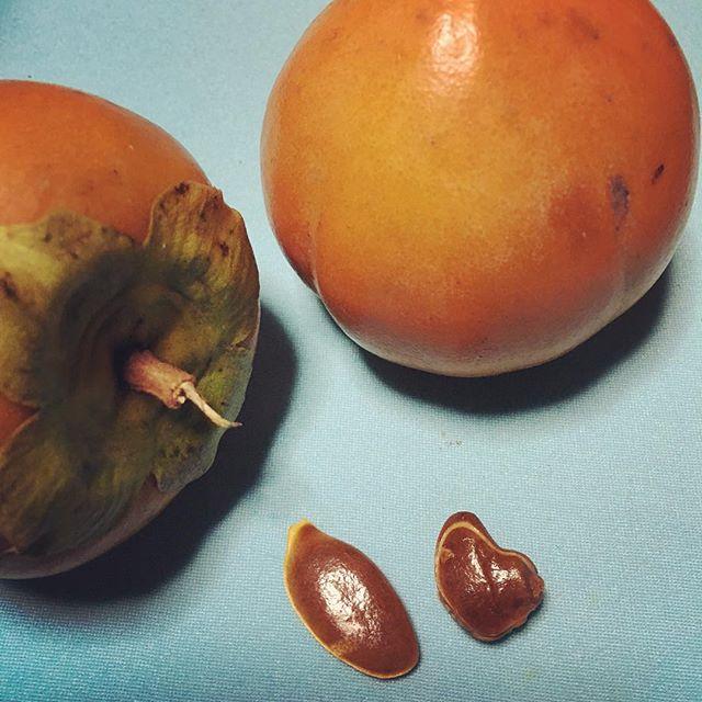 旬食材「柿が赤くなれば、医者が青くなる」と言われるほど健康食として優れています。苦手だけど食べたら種が♡だった(^ ^) #健康整体の家つみき #健康整体 #健康 #福島市 #食事 #旬 #柿 #ミネラル #ビタミン #タンニン #ペクチン #β-カロテン #食べ過ぎには要注意 #美容 #ダイエット #操体法