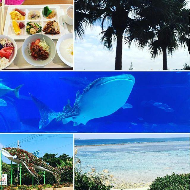 美ら海水族館で大好きなジンベイザメ(^ ^)♪ジンベイザメのように優雅に泳いでみたい!! #沖縄 #家族旅行 #美ら海水族館 #ジンベイザメ #健康整体の家つみき #健康整体