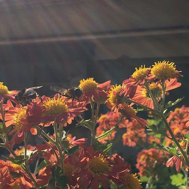 文化の日♡風は強いけど太陽が出てハチも一生懸命!!健康整体の家つみきも負けずに通常営業してます(^ ^) #健康整体の家つみき #健康整体 #福島市 #fukusima #ボテフォレパン #女性スタッフ #操体法 #健康 #文化の日 #通常営業 #ご予約お待ちしております