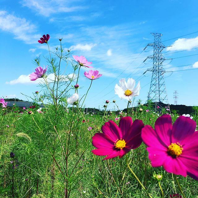 東日本大震災から6年半。今年4月に避難解除された富岡へ運転を頼まれて、行くことになりました。そこで見たものは、蕎麦を育てていた畑はコスモス畑へ。誰も住まなくなり、解体された家の敷地には綺麗な花が。震災時、海に流された駅は新しくなり、色々まわりは変わったけど…もう誰も通っていない学校が変わらず建っている。あれから6年半経った今、みんな何を思うのか?私は、あの時とは違う仕事をしているけど、あの時と変わらず困っている誰かのために出来ることをしたいと日々を過ごしています!#健康整体の家つみき #健康整体 #操体法 #福島市 #福島市整体 #飯坂 #飯坂整体 #bodywork #bodypreparation #health #fukushima #japan #震災から6年半 #富岡 #コスモス畑 #綺麗な花 #新しくなった駅 #学校 #困っている人のために