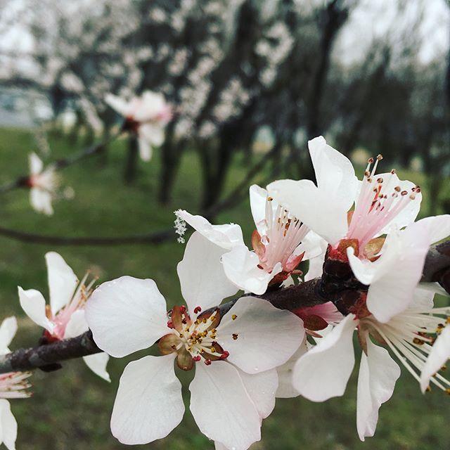 雪や寒さにまけず、少しだけさんぽしてみたらキレイなものに出会えて、カラダもココロもスッキリ!!#散歩 #桜 #寒椿