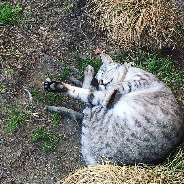 ネコさんはこんな格好でも気持ちいいみたい!人もカラダの感覚にまかせて気持ちいいことしたらいいですよ!!