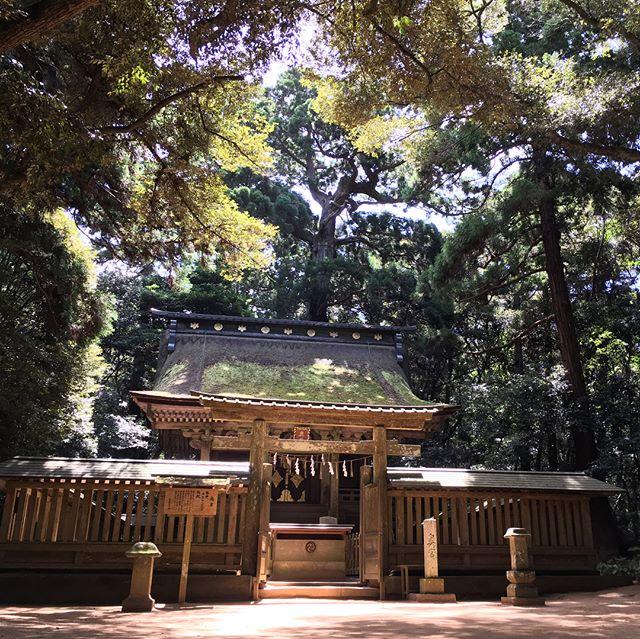 自然のパワーが凄すぎる鹿島神宮!