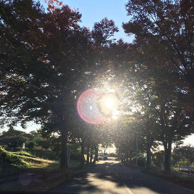紅葉を撮ろうとしたら朝陽が…️キレイだから良しとして!今日は、名取出張でMさん宅へお手製麻婆豆腐ごちそうになりました(^^)最高でした♪
