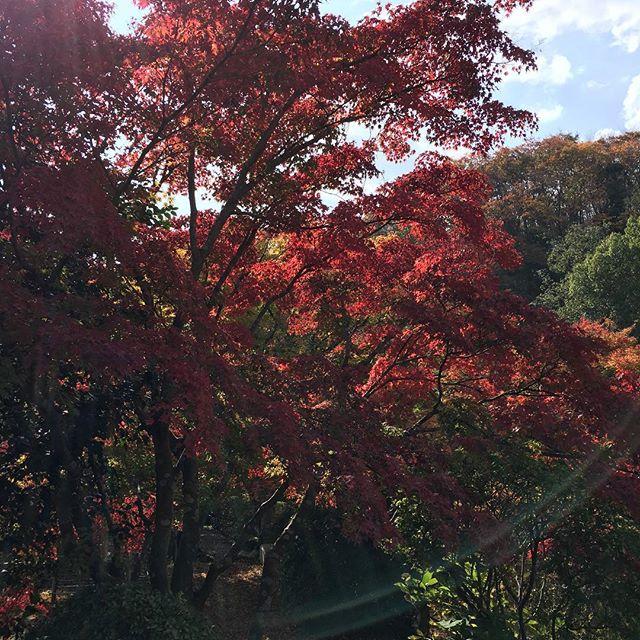 〇〇の秋第2弾!太陽の光がとてもあたたかく気持ちいいあの朝ドラで話題になった五平餅も食べてみた♪