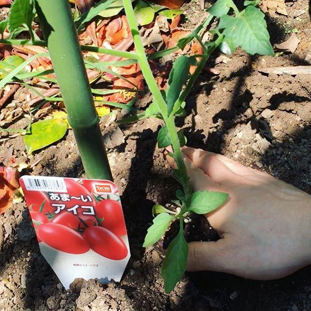土いじり!最近、土にふれることがないと感じ、思いたって庭を耕し家庭菜園をすることにしました^_^