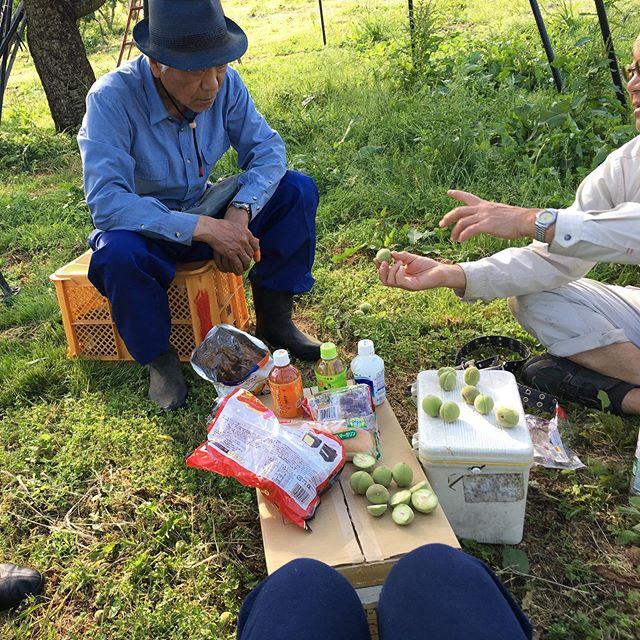 プチ講習会。桃の摘果でハートな桃見つけちゃいましたよ^_^違いを見極める目は施術に活かせそうです!