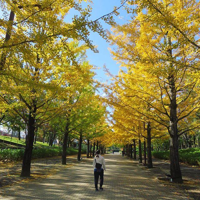 秋を感じながらウォーキング銀杏並木に初キツツキ、久しぶりの鉄棒!意外と出来るもんですね〜♪