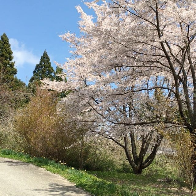 鳥の声と風、色とりどりの花をながめながら五感をフル稼働して、ストレス発散ウォーキングしてきました♪